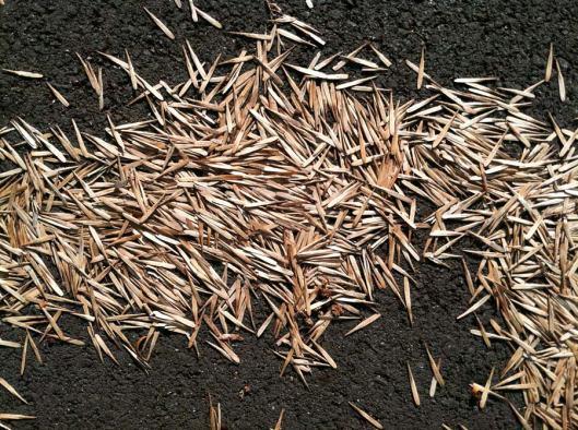 alice-frenz-ash-seeds-1073