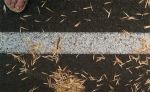 alice-frenz=2012-July-white-ash-seeds3-x600